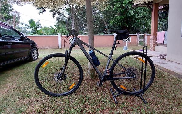 Scotty Grayhound   Togoparts Rides