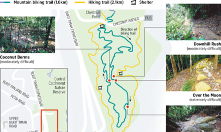 New Mountain Biking and Hiking Trail at Chestnut Nature Park
